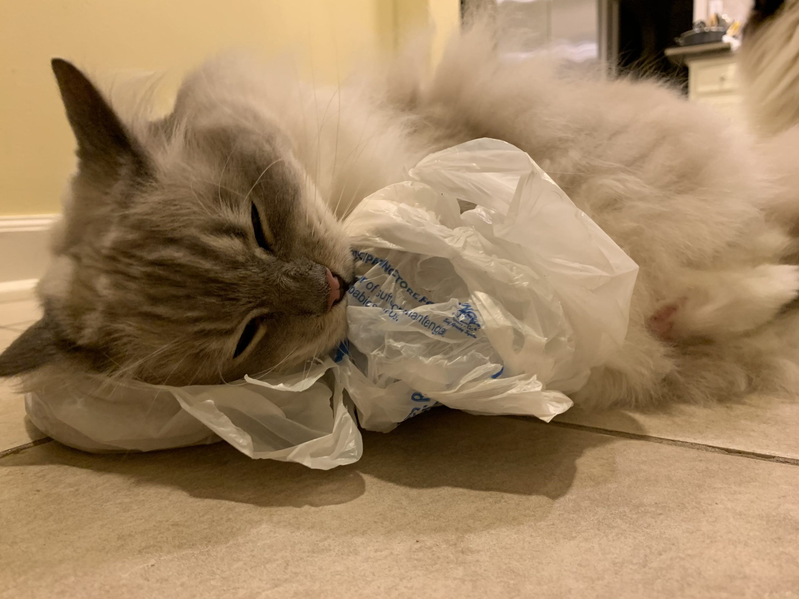 Why Do Cats Lick Plastic Why Do Cats Chew On Plastic Bags
