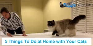5 Things To Do at Home with Your Cats
