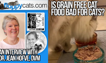 Is Grain Free Cat Food Bad for Cats An Interview with Dr. Jean Hofve, DVM