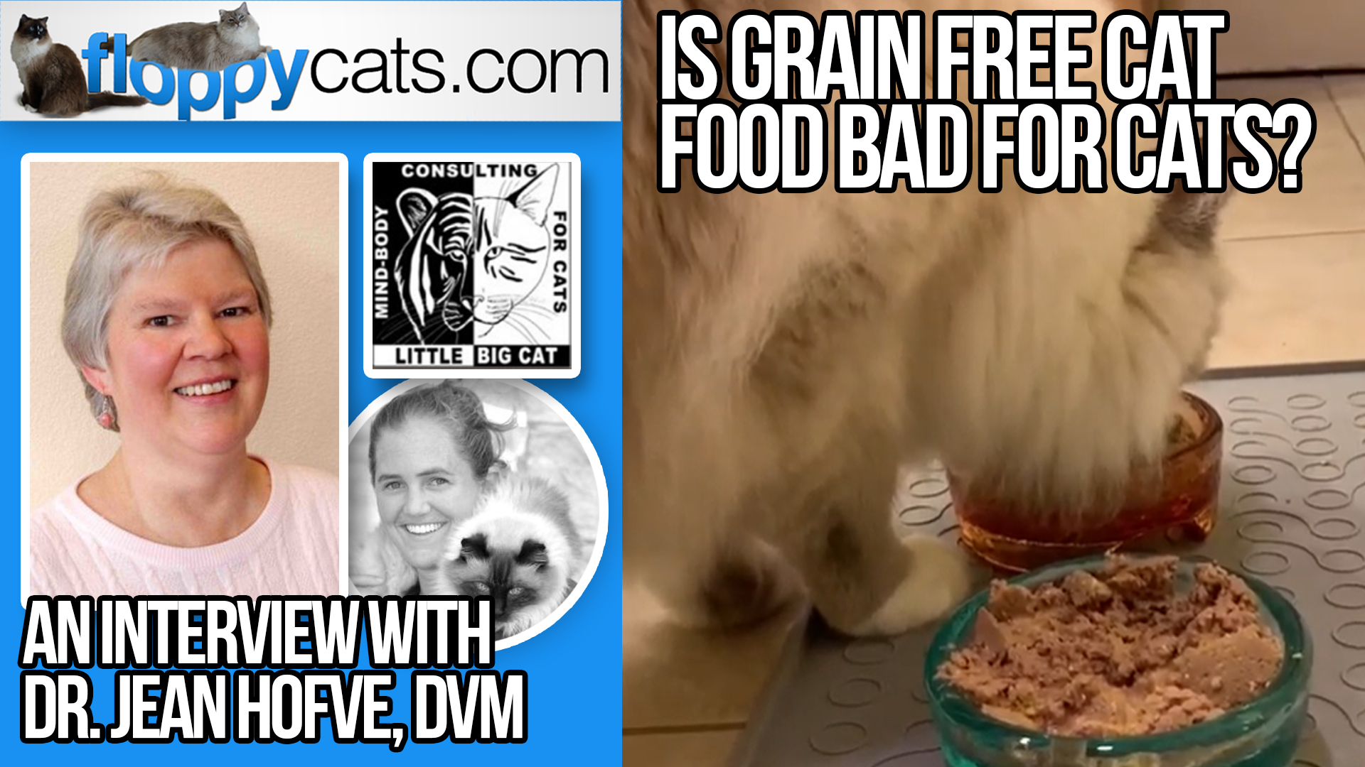 can a no grain diet harm cats
