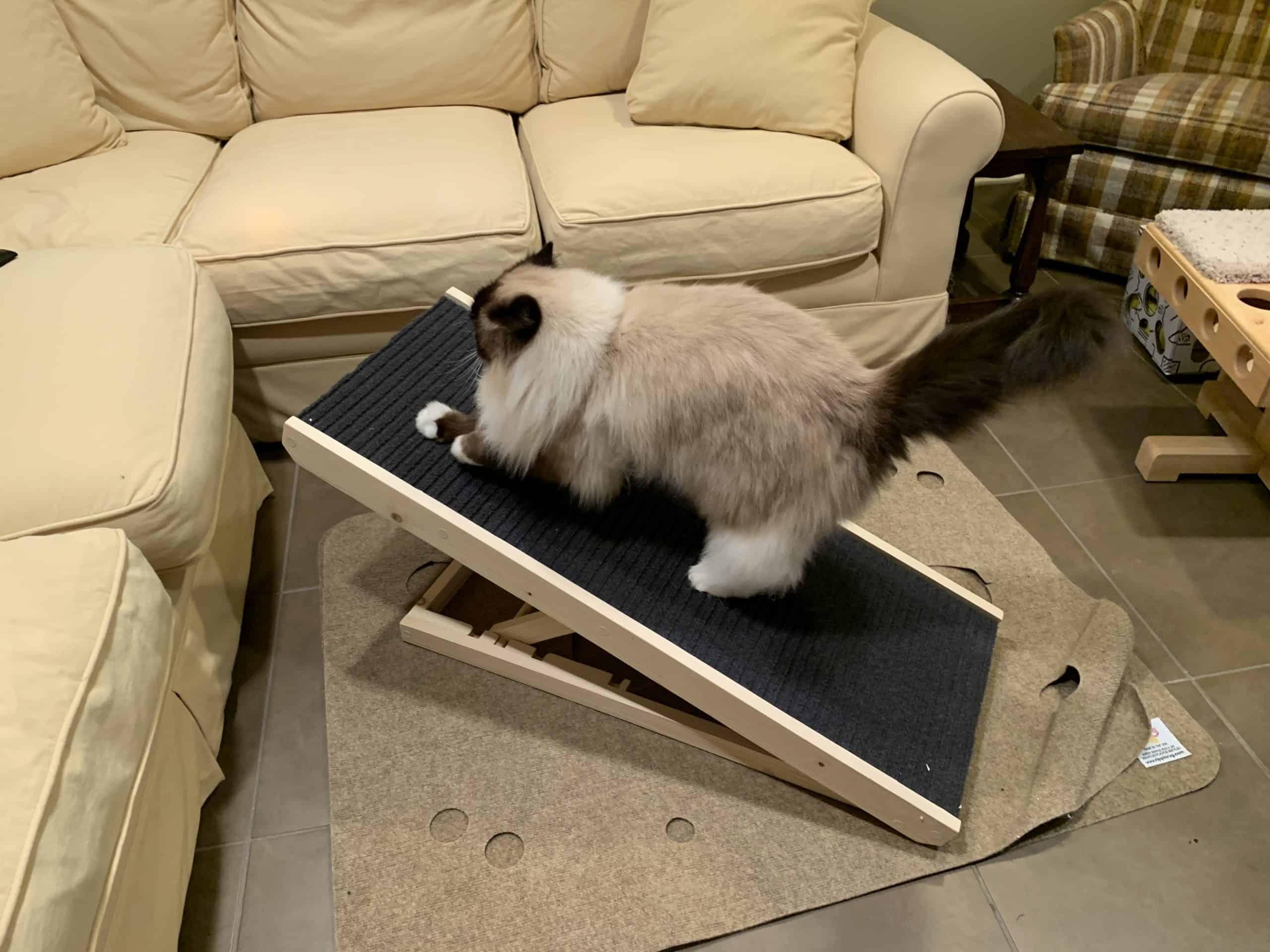 Cat Scratcher Unboxing Review Cat Ramp Amp Incline Cat