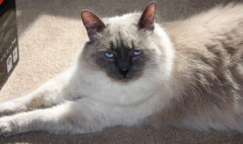 Tuna Cat - Floppycat of the Week