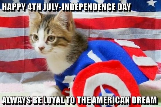 Always be loyal to the american dream 4th of July Cat Meme