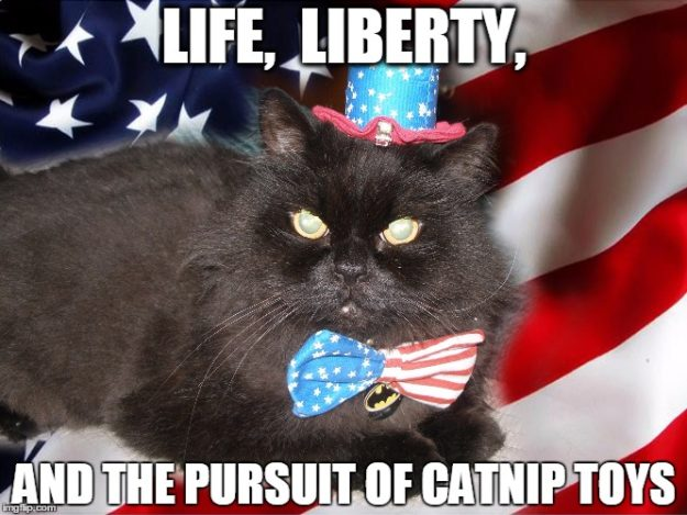 AmeriCats favorite day 4th of July Cat Meme