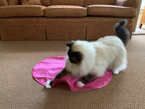 Blackhole Catch The Tail Cat Toy IMG_4472