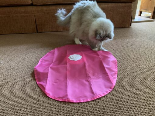 Blackhole Catch The Tail Electronic Cat Toy IMG_4459