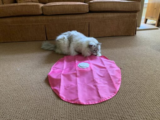 Blackhole Catch The Tail Interactive Electronic Cat Toy IMG_4458