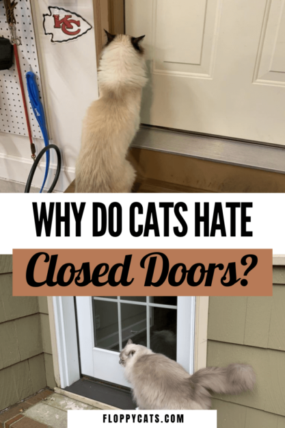Why do cats HATE closed doors? | Cats and Closed Doors | Cat Behavior Explained | Cat Behavior Problems | Cat Behavior Meaning | Cat Behavior Explained Truths | Cat Behavior Funny | Cats Behavior Facts | Cat Facts | Cat Facts Interesting | Cat Facts Funny | Cat Tips | Animal Tips | Pet Behavior