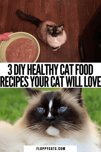 3 DIY Cat Food Recipes That Are Healthy | DIY cat food recipe homemade | Cat food recipe easy | Cat food recipe DIY | Cat food recipe cooked | cat food recipe homemade cooked | cat food recipe chicken | Healthy cat food recipes | Healthy cat food | homemade cat food recipes healthy | DIY cat food recipe healthy | Cat Food