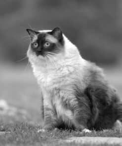 Meet Caymus of Floppycats