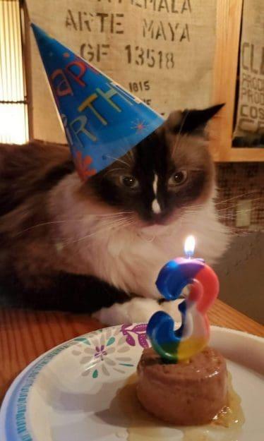 Gâteau d'anniversaire de chat