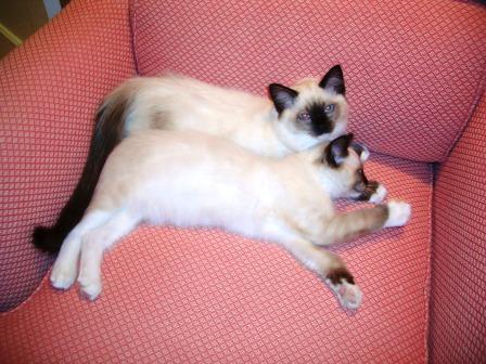 As Kittens