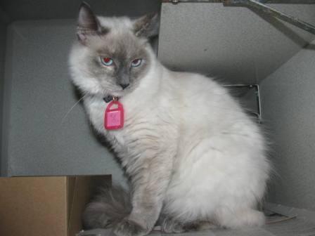 cat training shock pads