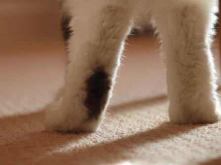 Murphy's Feet
