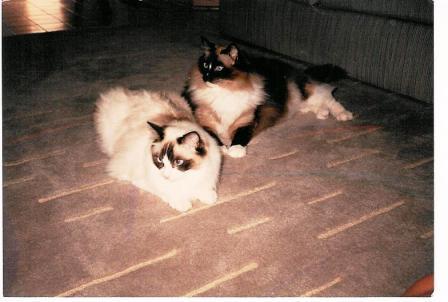 Halston and Ashely