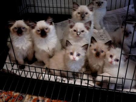 Gails Kittens