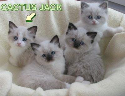 Cactus Jack as a Kitten