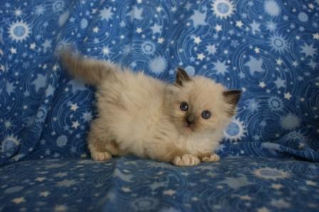 Cat Adoption Fort Lauderdale